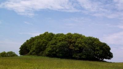 In der Natur Selbstheilungskräfte erwecken und Kraft schöpfen. Kraftort Hiddensee. (Hügelgrab)